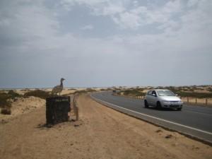 Дорога к самому красивому пляжу Фуэртевентуры - Корралехо